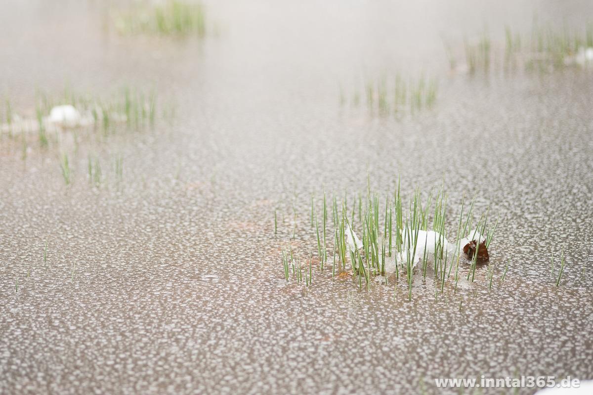 06.04.2015 - Gräser trotzen dem angefrorenen Wasser