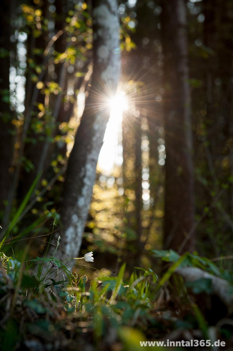 Sonnenstreifen im Wald am Buchberg