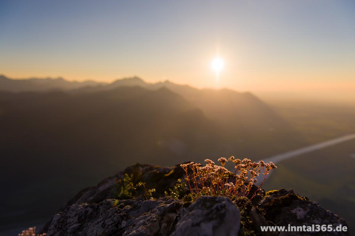 25.08.2015 - Blümchen auf dem Gipfel