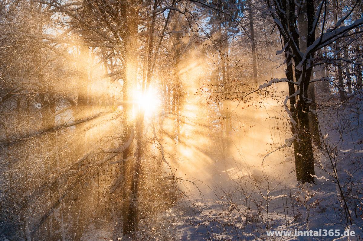 19.11.2016 - Schneestimmung im Wald